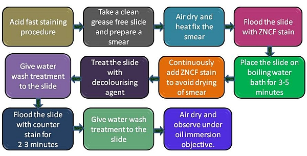 Acid Fast Staining Procedure