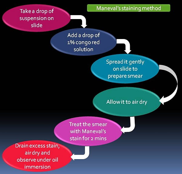 Flow chart of Capsule staining by Maneval's method