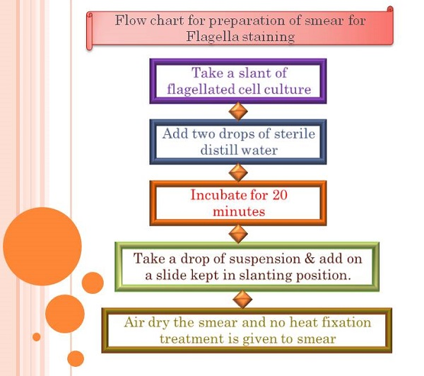 Flow chart of smear preparation