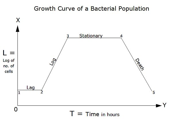 Growth of a Bacterial Cell