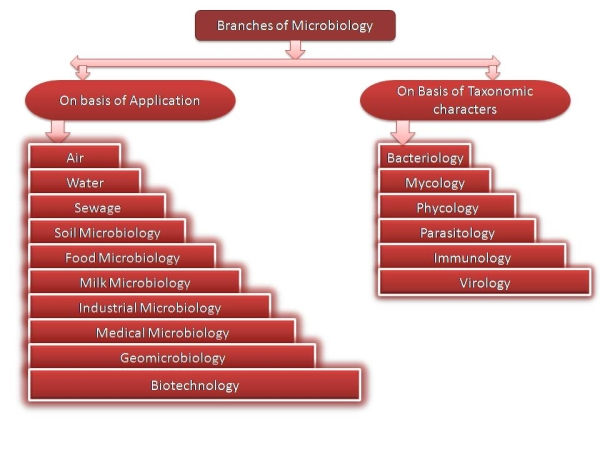 Branches of microbiology - Wikipedia
