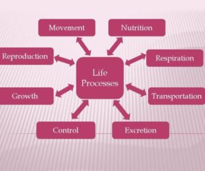 Overview on Life Processes CBSC Syllabus