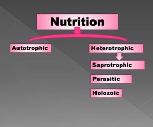 Nutrition An Important Life Processes