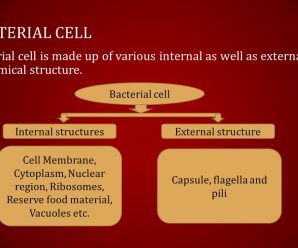 Structure of Typical Bacterial Cell