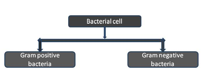 Types of bacterial cell