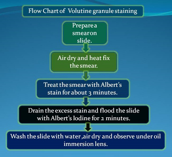 Flow chart of volutine granule staining procedure.