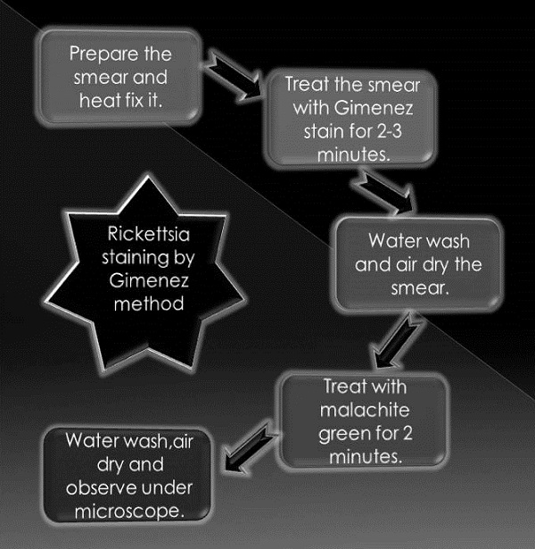 Flow chart of Rickettsia staining Procedure by Gimenez method