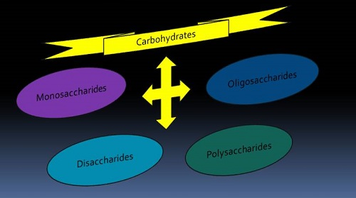 Carbohydrates and its Types