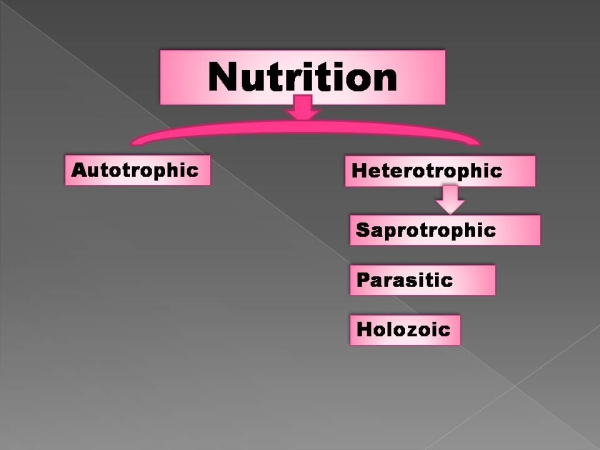 Nutrition a important life process