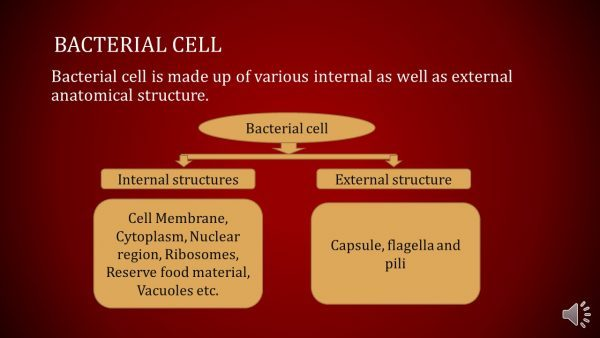 Structure of Typical bacterial cell e1516209629909 structure of typical bacterial cell general microscience